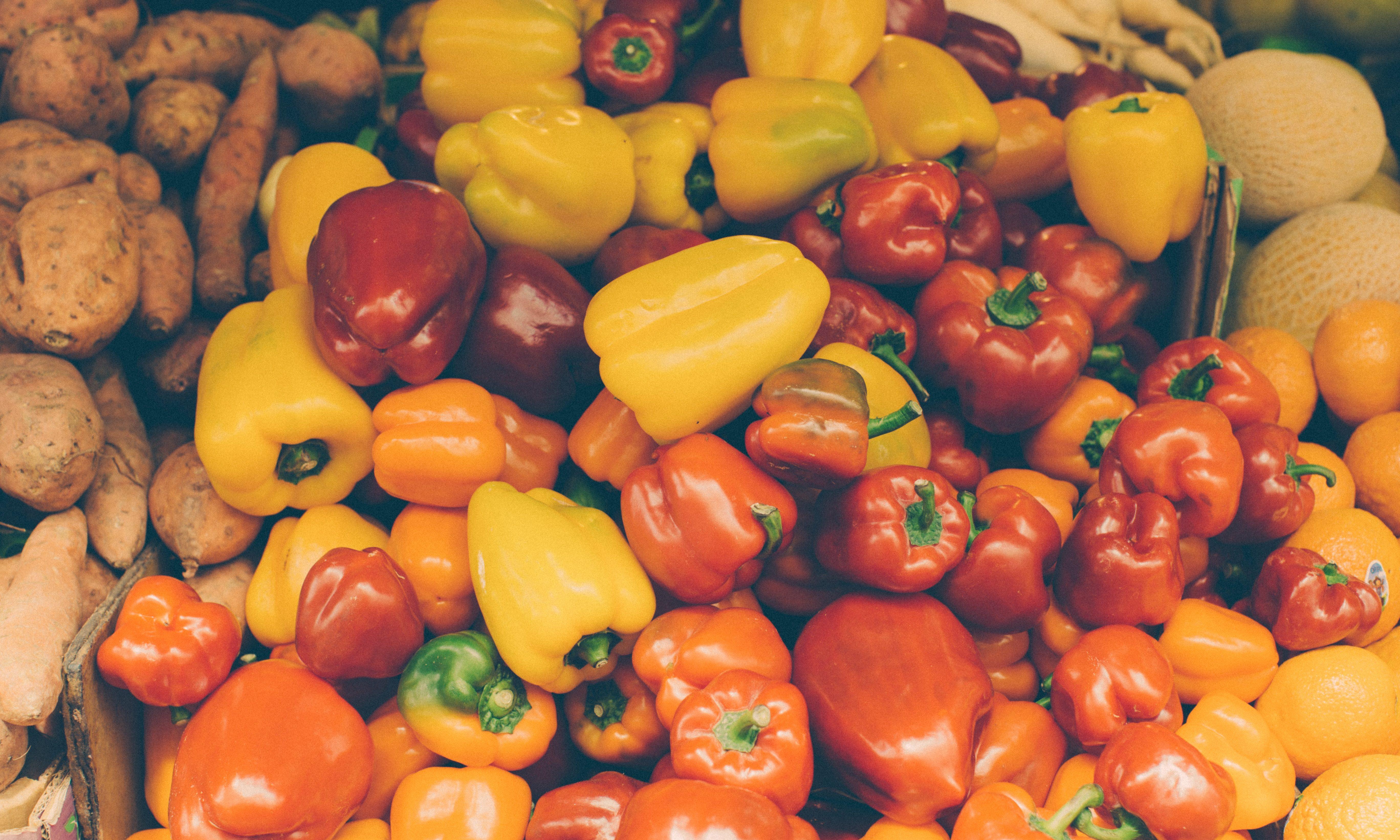 Tehnologija proizvodnje paprike u plasteniku – od zrna do ploda