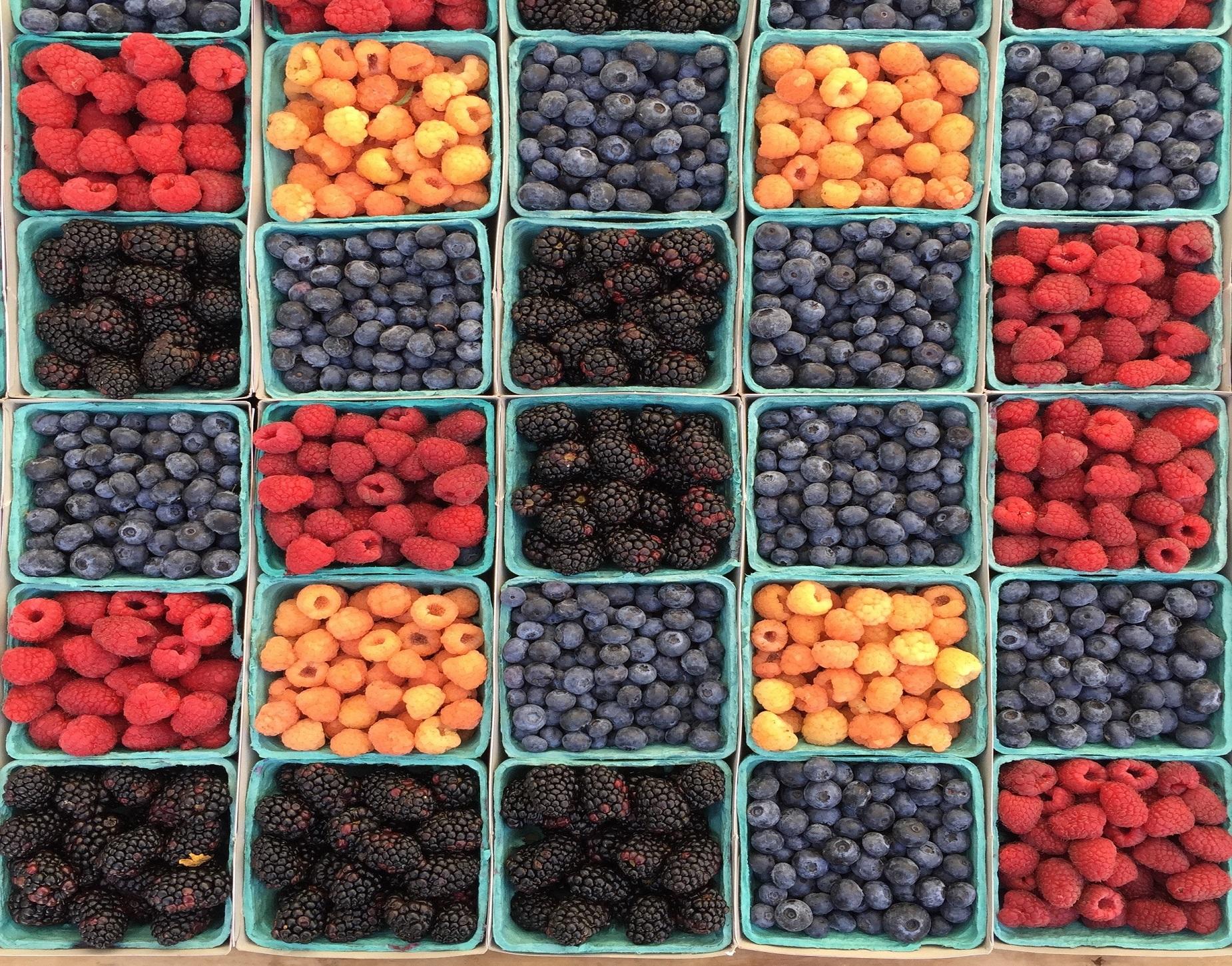 Održana konferencija proizvođača i otkupljivača jagodičastog voća u Sarajevu