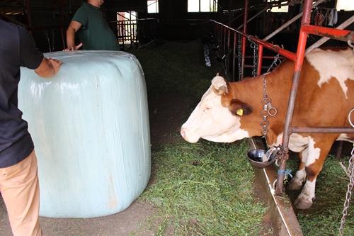 Програм унапређења квалитета кабасте и концентроване сточне хране произведене и спремљене на фармама пољопривредних произвођача