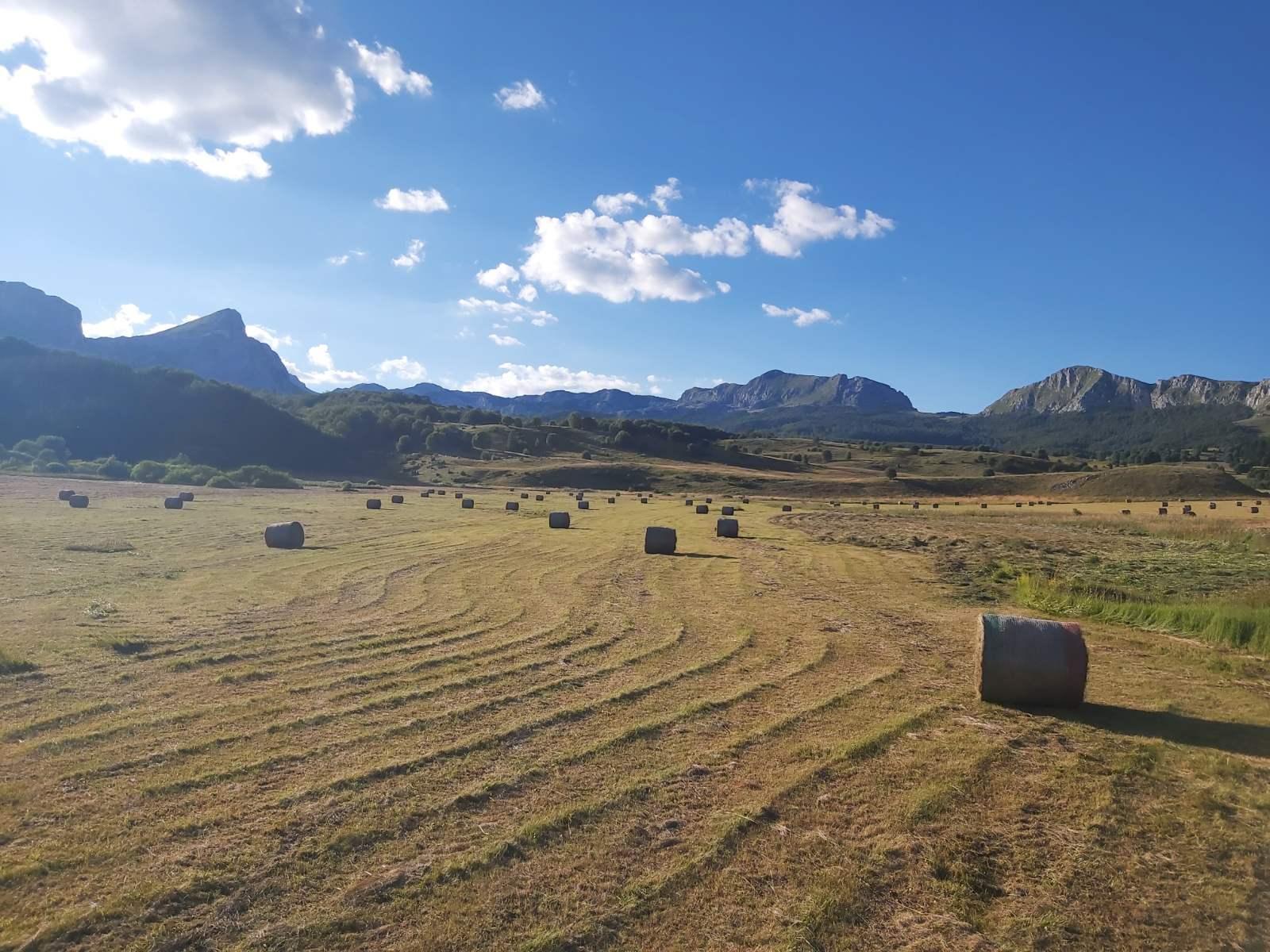 """Пољопривредна задруга """"Гвозно"""" – успјешна производња на преко 1.200 m надморске висине"""